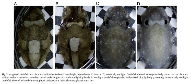 cuttlefishJEMBEfig3